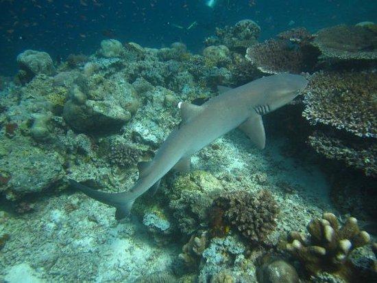 Dive The World:                   Sipadan1