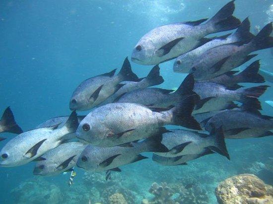 Dive The World:                   sipadan3