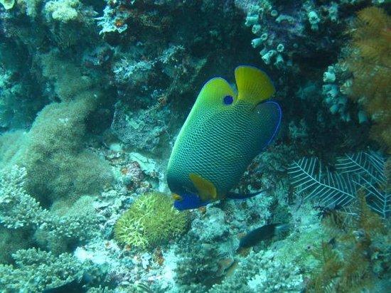 Dive The World:                   sipadan7