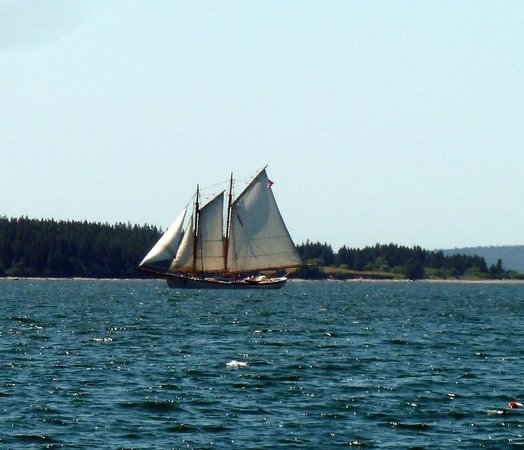 Sail Acadia: One out in the bay