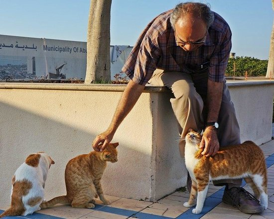 La Corniche: Pet stray cats at the Corniche