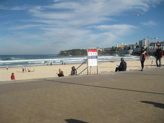 bondi beach boardwalk