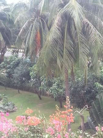 Palm Beach Resort & Spa Sanya: Красивые пальмы