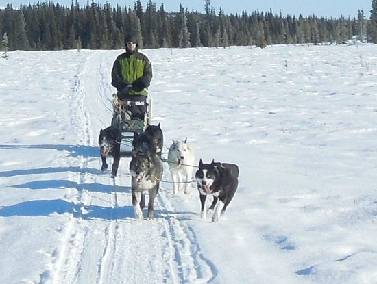 Healy, AK:                   Mushing across the tundra