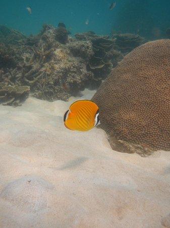 CSI: SAMUI Dive School :                   fish