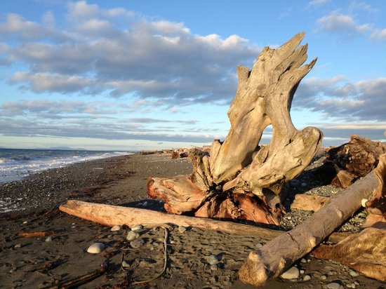 Dungeness National Wildlife Refuge:                                     Driftwood