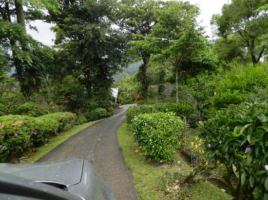 La Montana y el Valle Coffee Estate Inn: After entering the gate, this is the driveway to the bungalows.
