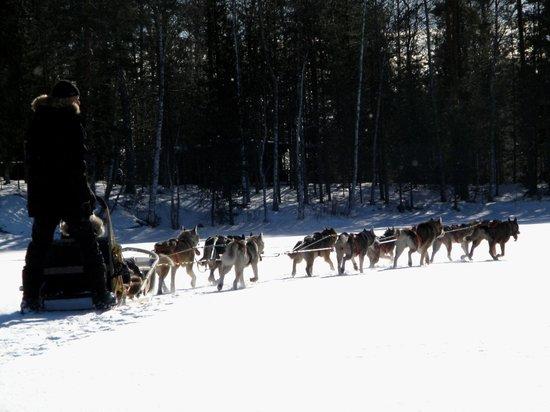 Holiday Centre Haapasaari:                   Husky sledge ride