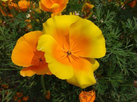 Lady Hydari Park:                   Pretty flowers