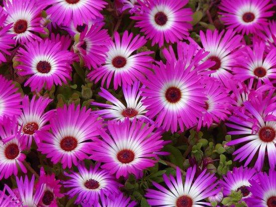 Lady Hydari Park:                   Colorful flower