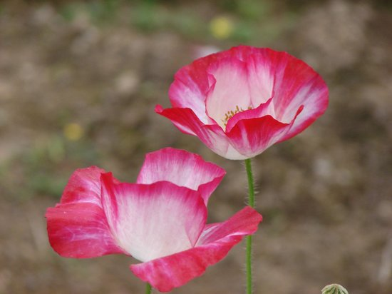 Lady Hydari Park:                   More flora!