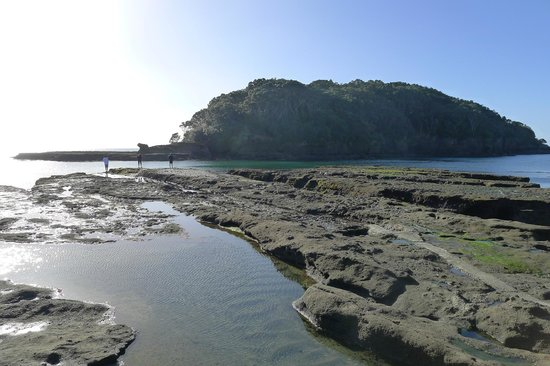 Goat Island Marine Reserve:                   Goat Island - Low tide rock ledge on calm day