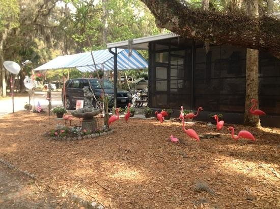 Sugar Mill Ruins Travel Park:                   Flamingo flock