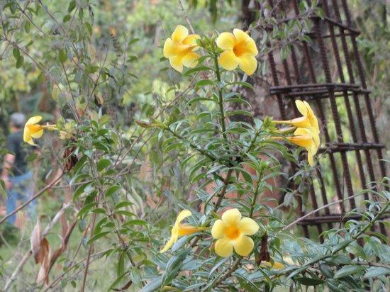 Prabhu Shrusti Resort :                                     Abundant flora