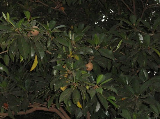 Prabhu Shrusti Resort :                                     The fruit trees attract a lot of birds
