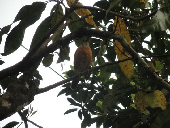 Prabhu Shrusti Resort :                                     Well camouflaged