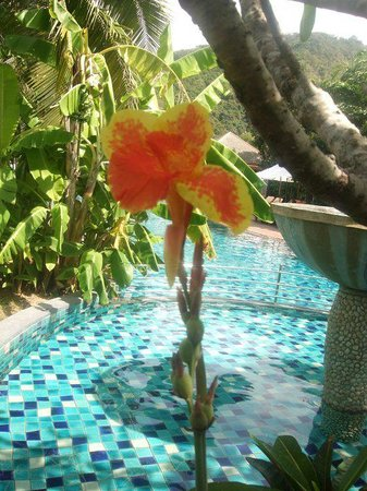Metadee Resort and Villas:                   a beautiful blooming orchid by the pool