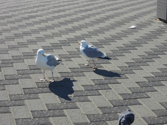 NH Atlantic Den Haag:                   feeding the birds at the beach