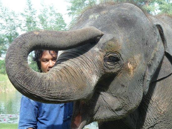 อังสนา ลากูน่า ภูเก็ต:                   Lucky The Elephant