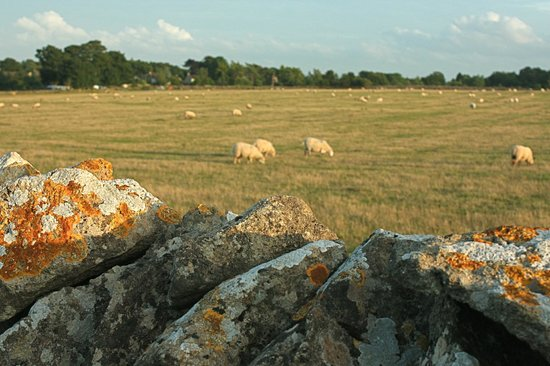 Church Farm Country Cottages: Church Farm Stone Wall views