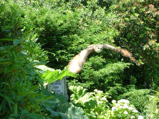 Dartmoor Zoological Park:                   Owl in flight