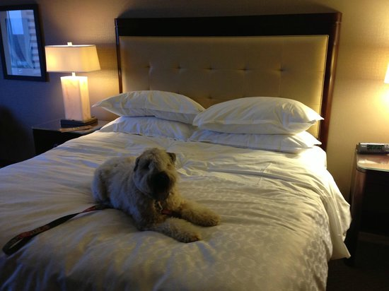Sheraton Indianapolis Hotel at Keystone Crossing :                   Soft bed.