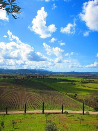 Conti di San Bonifacio Wine Resort:                                     Never a lack of a view