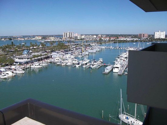Holiday Inn Hotel & Suites Clearwater Beach:                   Lots of dolpins to see too!