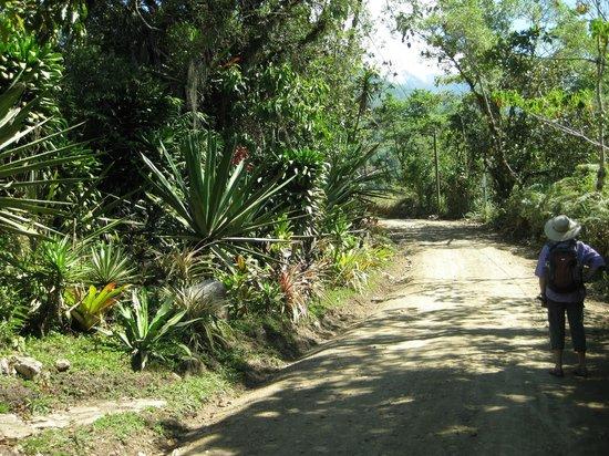 Roca Dura Cafe (Hard Rock Cafe):                                     Day hikes around San Gerardo de Rivas