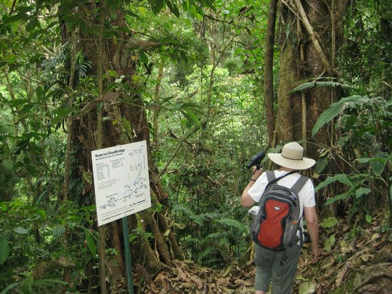 Roca Dura Cafe (Hard Rock Cafe) :                                     Cloudbridge Reserve is a 'must see' easy to moderate day hik