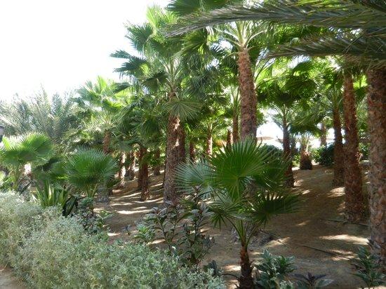 Hotel Riu Palace Cabo Verde: Les jardins du Riu Funana