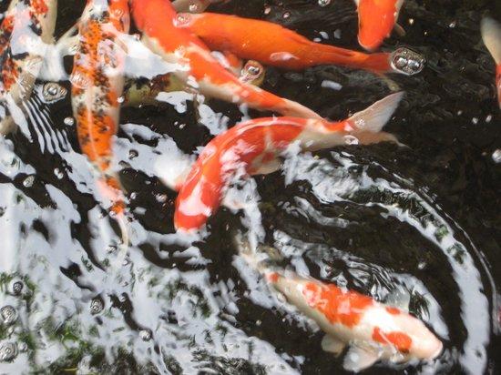 Risata Bali Resort & Spa:                   Fish pond behind reception
