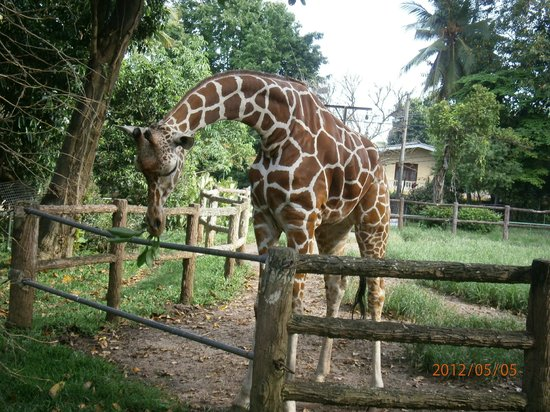 National Zoological Gardens of Sri Lanka:                   Dehiwala Zoo-Colombo,Sri Lanka