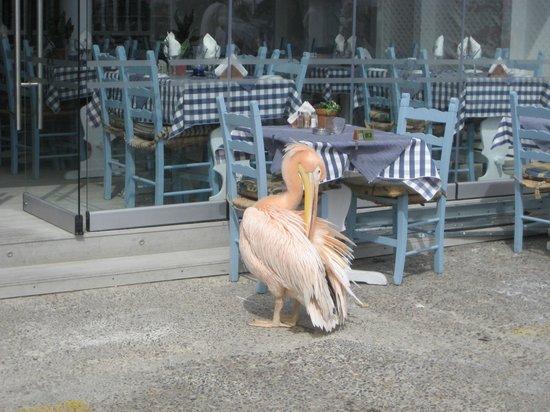 Atlantica Golden Beach Hotel 사진