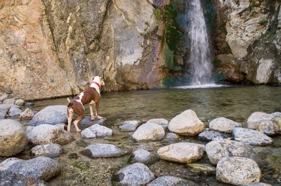 Eaton Canyon:                   typical visitor you'll see here. good boy :)