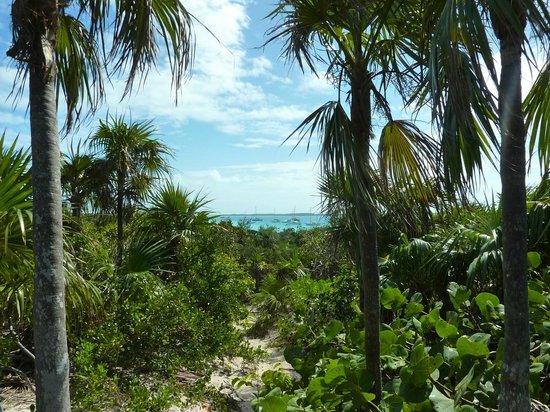 Hotel Higgins Landing:                   Weg über die Insel