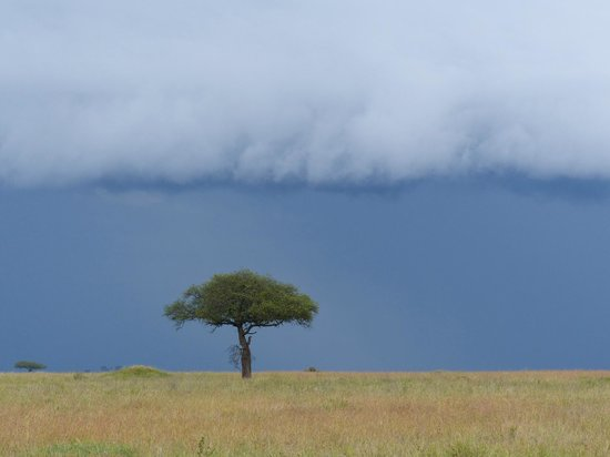 Dunia Camp, Serengeti:                   rain approaching