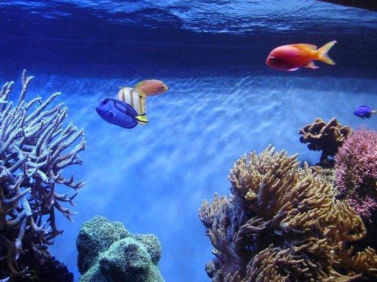 Fauna Marinha No Monterey Bay Aquarium Picture Of