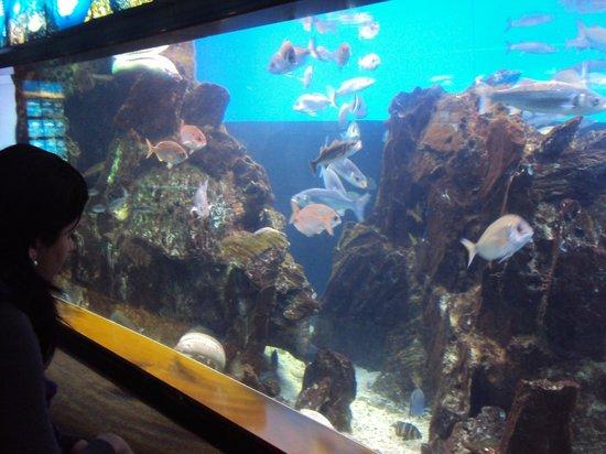 Starfish Picture Of L Aquarium De Barcelona Barcelona