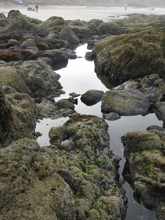 The Coho Oceanfront Lodge:                   Tidepools on beach below the Coho