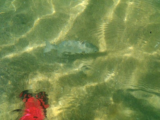 Las Brisas Huatulco:                   Water so clear... fish swimming around feet
