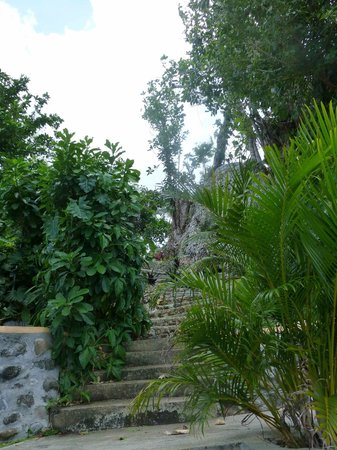Pimento Lodge Resort:                   Walk from the Pool Area up the Hillside at Pimento Lodge