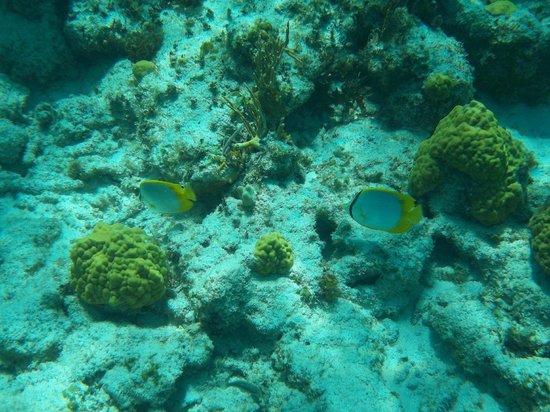 Sun Charters:                   Underwater photos                 