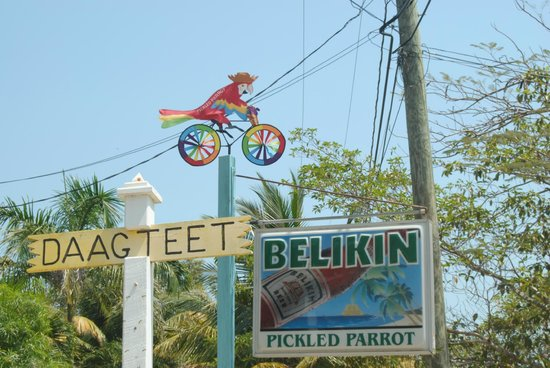 Pickled Parrot: Parrot is riding