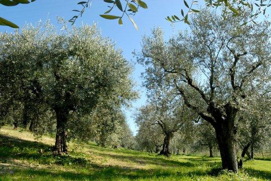 La Tana delle Stelle : passeggiata tra gli ulivi