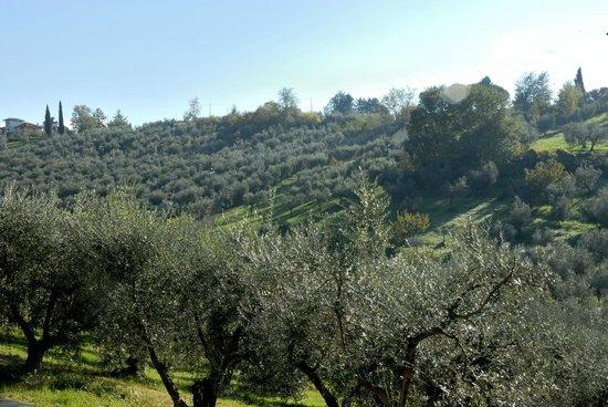La Tana delle Stelle : veduta degli ulivi