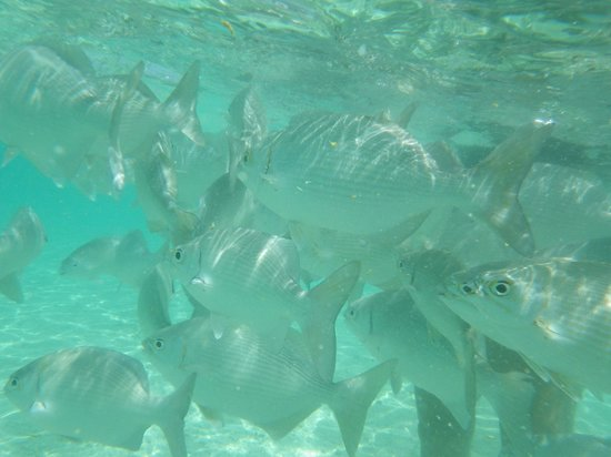Grand Bahia Principe Tulum: mar