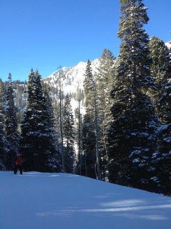 Solitude Mountain Resort:                   Great skiing