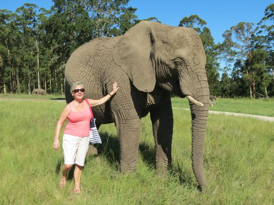 Knysna Tonquani Lodge & Spa: Kysna Elephant Park