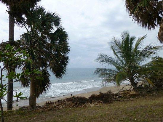 Treasure Beach Hotel:                   View of sea from TB Hotel